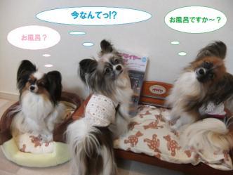 05-03_20120206112246.jpg