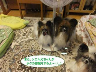 10-03_20120711120128.jpg