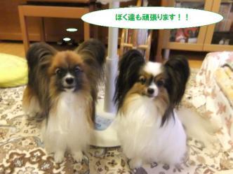 10-11_20120718213602.jpg