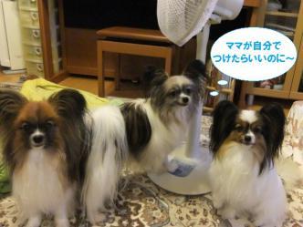 10-14_20120718213555.jpg