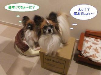 11-01_20120411102220.jpg