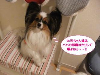 11-03_20120411102217.jpg