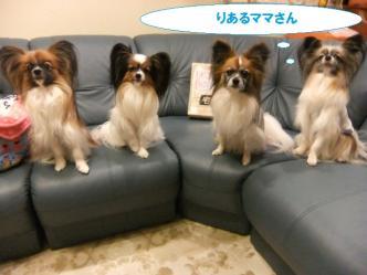 11-04_20120311113352.jpg