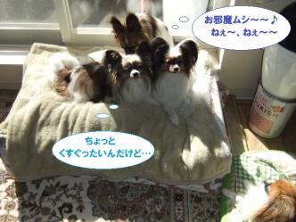 12-02_20111116073504.jpg