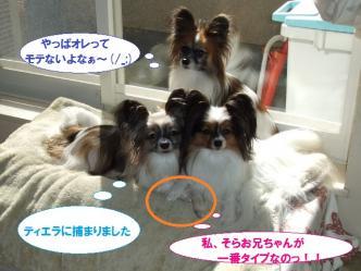 12-03_20111116073503.jpg