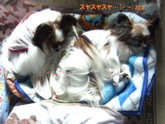 12-03_20120312151527.jpg