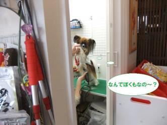 27-16_20120301173138.jpg