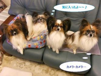 29-01_20111129191827.jpg