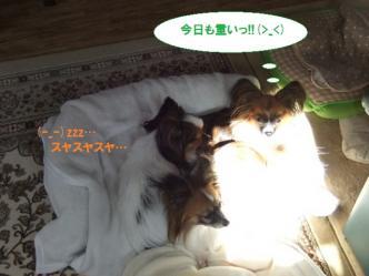 29-03_20111030122657.jpg