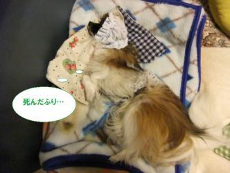 31-02_20120131205908.jpg