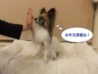 31-11_20111231205744.jpg