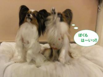 31-14_20111231205742.jpg