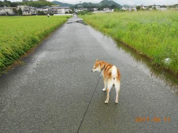 003_convert_20110917103402.jpg