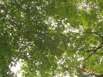 046_convert_20110816102926.jpg