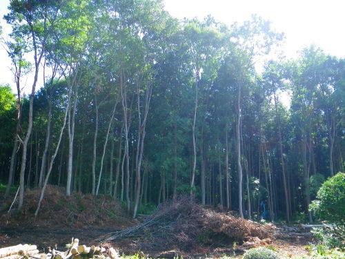 伐採918の1