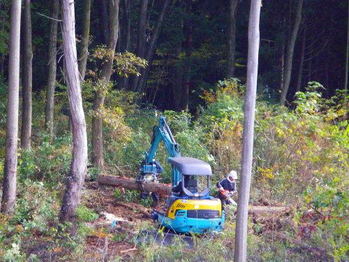 伐採1120の1