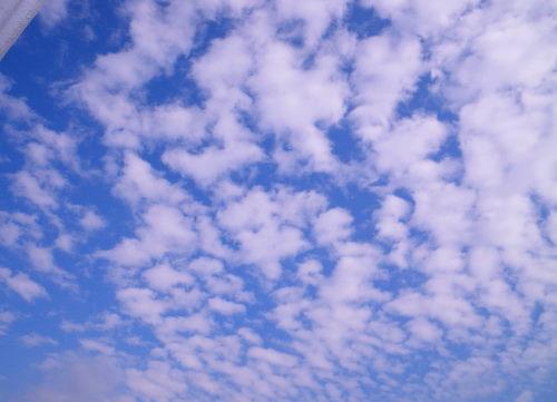 雲1126