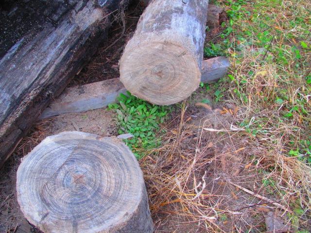 埋もれ木カット 008