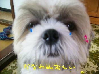 PA061080.jpg