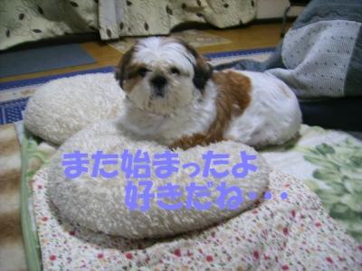 PC083313.jpg
