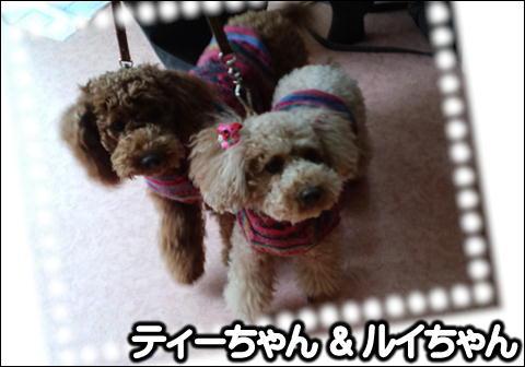 11_20110121164450.jpg