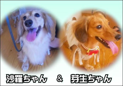 11_20121001110725.jpg