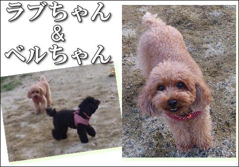 15_20121023164944.jpg