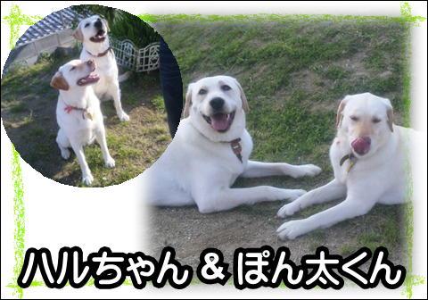 7_20120615145302.jpg