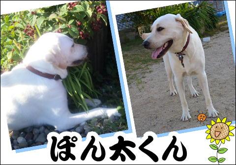9_20120821143057.jpg