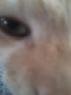 ガーナの目