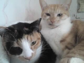 ガーナ&マリラ2