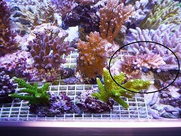 KRレビュー賞サンゴ20131116