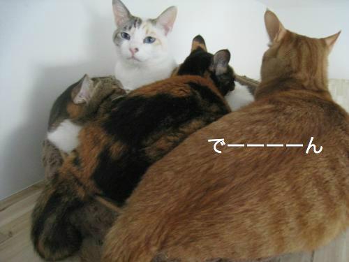 猫団子(2)