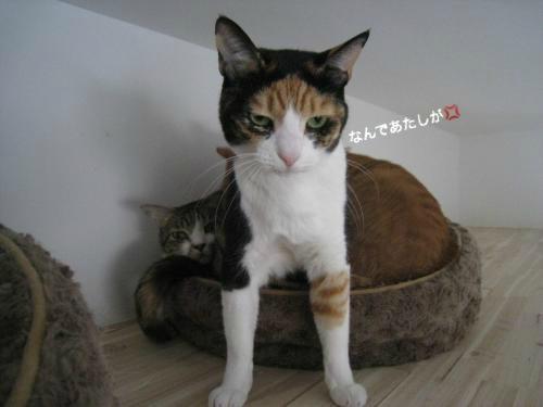 猫団子(5)