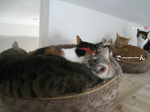 猫団子(4)