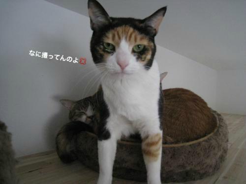 猫団子(6)