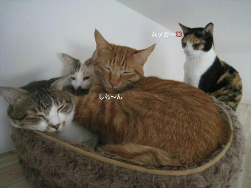 猫団子(10)