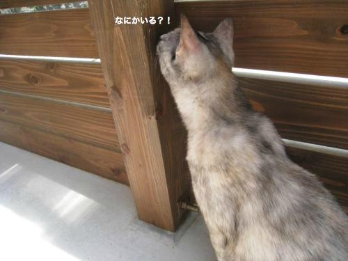 猫日和(4)