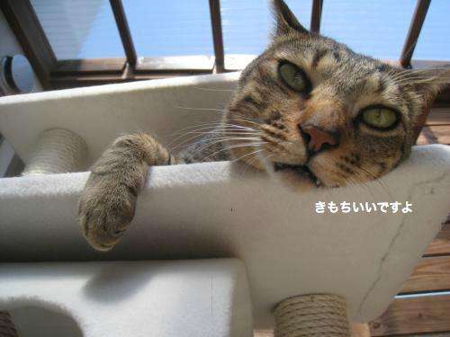 猫日和(5)