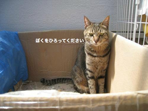 猫日和(7)