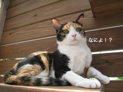 猫日和(8)