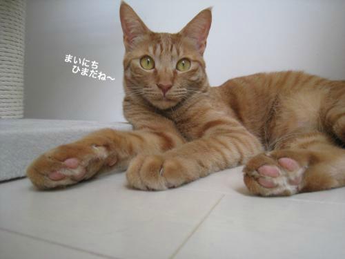 猫日和(9)