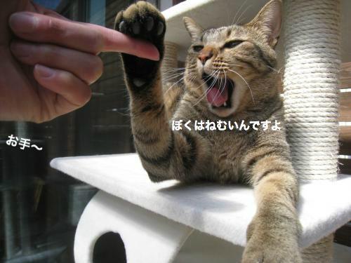 猫日和(12)