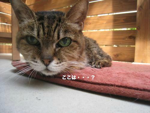 猫日和(14)