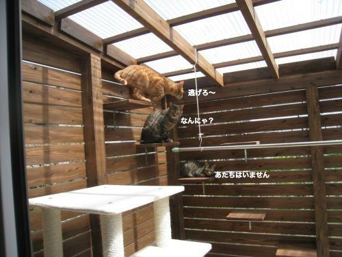 来客と猫(2)