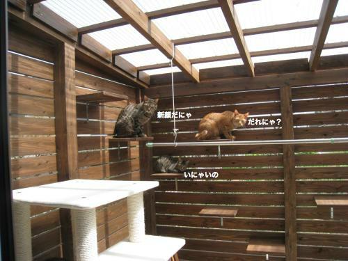 来客と猫(3)