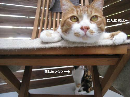 来客と猫(5)