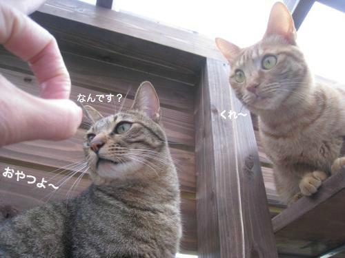 来客と猫(6)