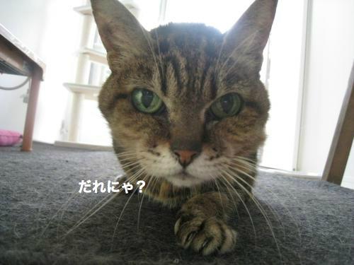 来客と猫(7)