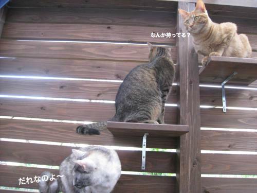 来客と猫(9)
